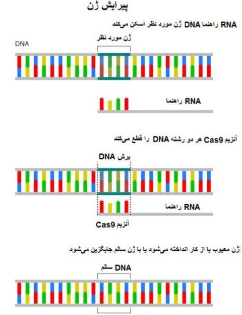 دستکاری ژنتیکی